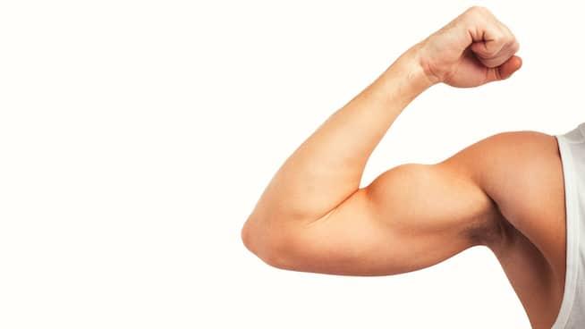 biceps brachiia